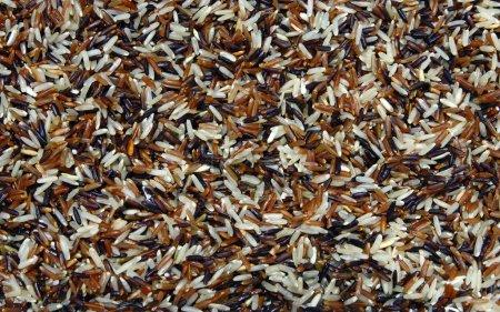 Photo pour Riz magenta humide Thai Whit-Red Jasmine et Fragment, Trois Amis Organic, texture de fond motif de surface . - image libre de droit
