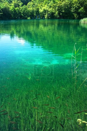 Section of Plitvice lake, Croatia, with underwater life