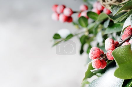 Photo for Branch of holly on grey background - Royalty Free Image