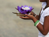 Flowers of a lotus in hands