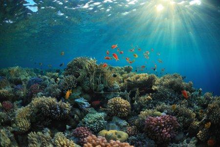 Photo pour Beau récif corallien et poissons mach - image libre de droit