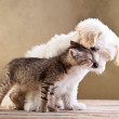 Friends - small dog and cat together...