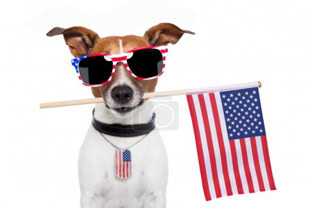 Photo for American dog with usa flag and shades - Royalty Free Image