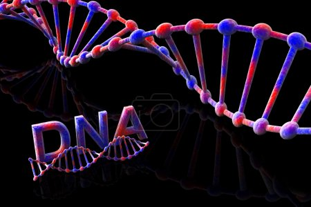 Photo for DNA-3d - Royalty Free Image