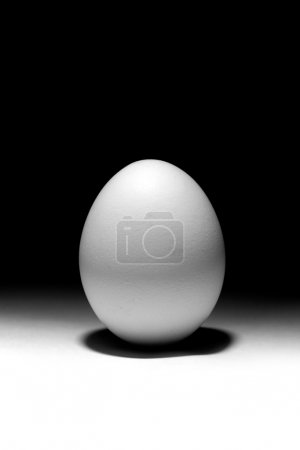 Photo for Simple egg - Royalty Free Image