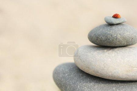 Ladybug on stacked stones