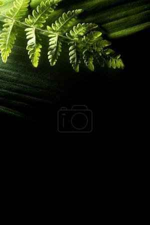 Photo pour Feuilles vertes - image libre de droit