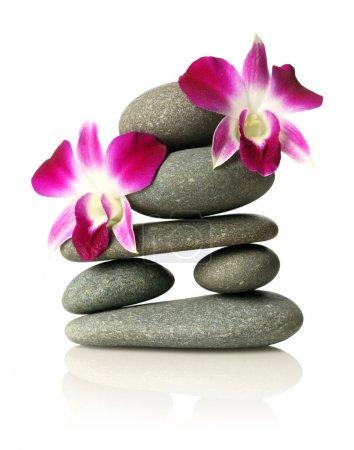 Photo pour Orchidées sur pierres empilées - image libre de droit