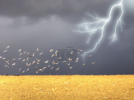 Lightning in the field