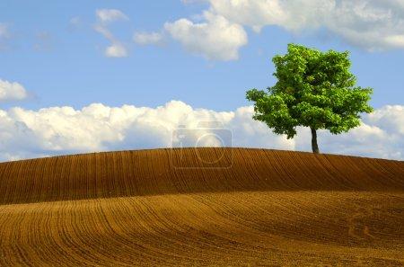Tree in plowed fields