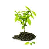Sazenice zelených rostlin na bílém pozadí