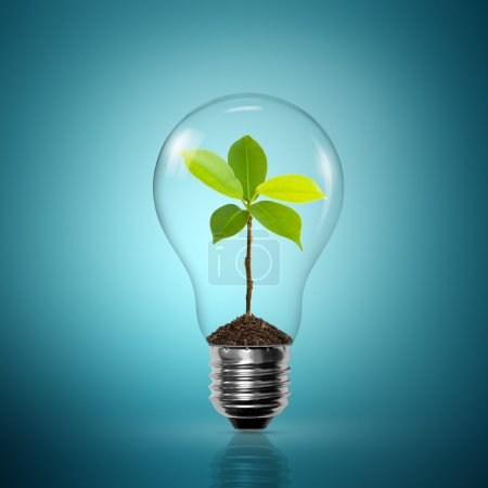 Photo for Bulb light with tree inside on blue background - Royalty Free Image