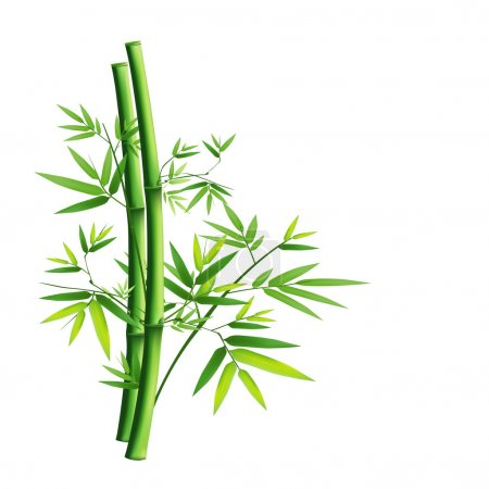 Illustration pour Vert bambou isolé sur fond blanc, illustration vectorielle - image libre de droit