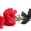 Carnations and black ribbon isolated on white...