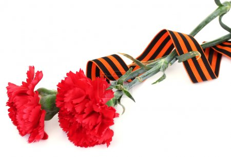Carnations and St. George's ribbon isolated on white