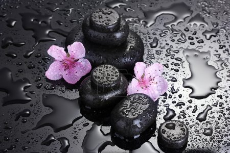 Spa stones with drops and pink sakura flowers on grey background