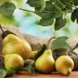 Juicy flavorful pears of nature background...