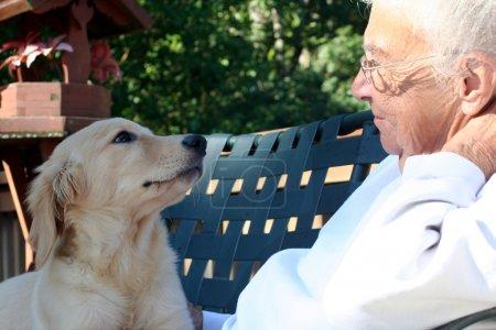 Photo pour Femme âgée souriante, regardant dans les yeux d'un chiot golden retriever avec affection, tout en étant assis à l'extérieur. - image libre de droit