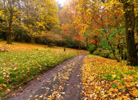 Photo for Autumn on the country road Australia - Royalty Free Image