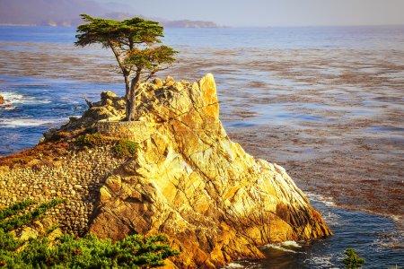 Lone cyprus at ocean coast, Monterey, California