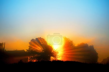 Beautiful dawn with sunbeams filtered through tree...
