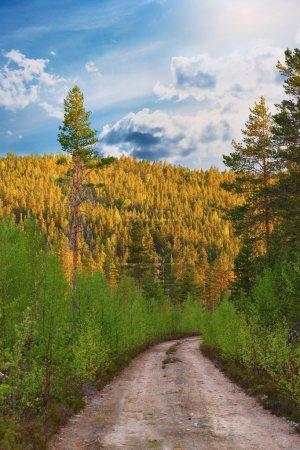 Photo pour Chemin de terre en pleine nature avec des conifères sous un soleil éclatant - image libre de droit
