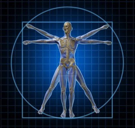 Vitruvian Human Skeleton Man