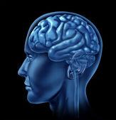 Neurologie symbolem mozku