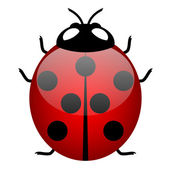 Illustration of ladybird (symbol of good luck) - vector