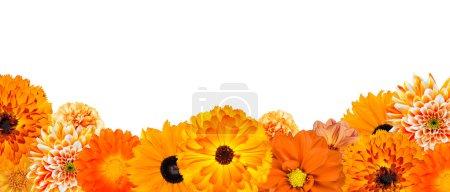 Photo pour Sélection de diverses fleurs orange à la rangée du bas isolé sur fond blanc. Dahlia, daisy, chrysanthème, pot marigold, carnation - image libre de droit