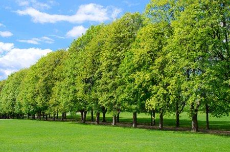 Photo pour Ligne d'arbres dans le populaire parc Vigeland à Oslo, Norvège - image libre de droit