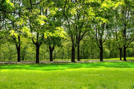 Photo pour Ligne d'arbres dans le parc Vigeland à Oslo, Norvège - image libre de droit