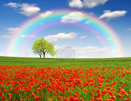 Photo for Rainbow above the spring landscape with red poppy - Royalty Free Image