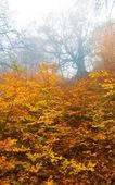 Red autumn forest in a mist
