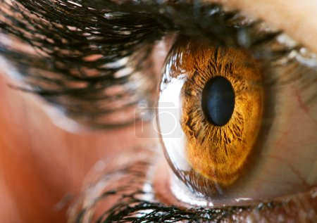 Photo for Human brown eye macro - Royalty Free Image