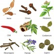 A set of different spices on a white background...