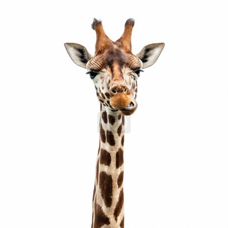 Photo for Funny giraffe's face isolated on white - Royalty Free Image