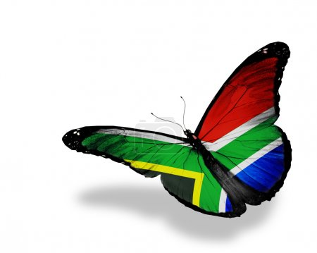 South Africa flag butterfly flying, isolated on wh...