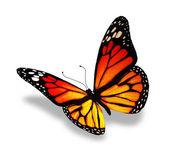 Sárga-narancs pillangó, elszigetelt fehér background