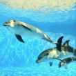 Family of dolphins swims under water...