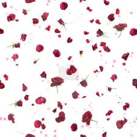 Foto de Repetible volador, rosas studio fotografiado con pétalos en color rojo oscuro, en una parte posteriora luz y las partículas bokeh, aisladas en blanco - Imagen libre de derechos