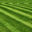 Parallel lines mowed grass in park as background...