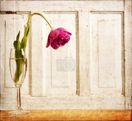 Photo for Wilted tulip grunge overlay, aging or depression concept - Royalty Free Image