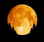 Shined full moon