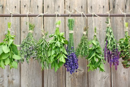 Photo for Various fresh herbs hanging on a rusty iron rod - Royalty Free Image