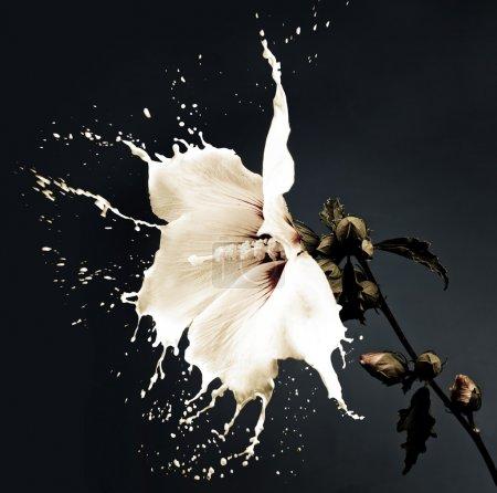 White splash flowers