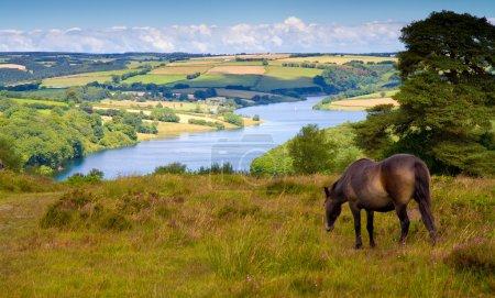 An Exmoor pony and Wimbleball Lake Exmoor National...