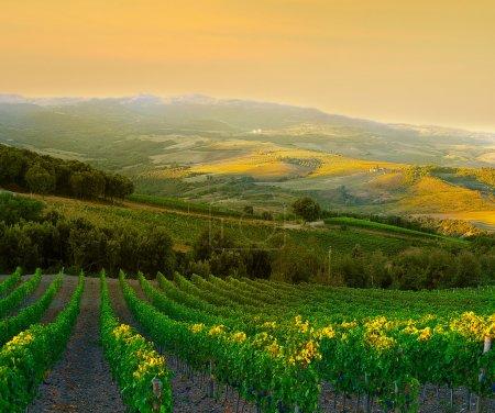 vignoble italien