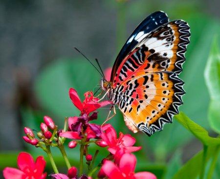Photo pour Le papillon - image libre de droit