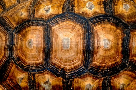 Close up view of the hexagonal texture of a turtle shell